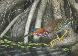 John Furches, NC Printmaker, creates etchings and aqua-tints from hand drawn zinc plates to reveal the connection of color and nature in rural landscapes.